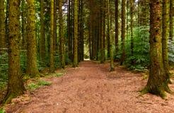 Bana till och med skogen Royaltyfri Bild