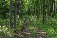 Bana till och med skogen Fotografering för Bildbyråer