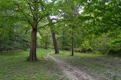 Bana till och med skogen Royaltyfri Fotografi