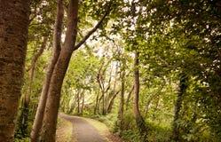 Bana till och med skogen Royaltyfria Foton