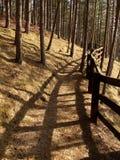 Bana till och med skogen Arkivbild