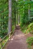 Bana till och med skogen Royaltyfria Bilder