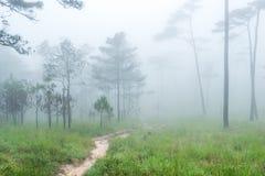 Bana till och med skogen i den tidiga våren under nederbörd Arkivfoton