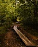 Bana till och med skogen i en molnig dag/höstfärger och en bana i en skog/banaplats med skuggor i skogen royaltyfria foton