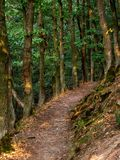 Bana till och med skogen längs den Rheinsteig slingan i Tyskland fotografering för bildbyråer