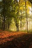 Bana till och med skogen med sidomorgonljus Arkivfoton