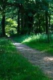Bana till och med skogsmark Royaltyfri Foto