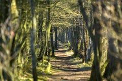 Bana till och med skogsmark Fotografering för Bildbyråer
