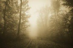 Bana till och med spökad skog med tjock dimma Royaltyfri Foto