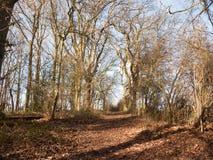 bana till och med träd för skäll för soligt ljus för skog för höstvintervår kala inget Royaltyfri Bild