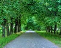 Bana till och med träden royaltyfri foto