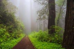 Bana till och med träden fotografering för bildbyråer