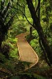 Bana till och med tropisk skog Arkivfoton