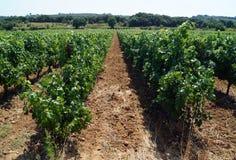 bana till och med vingård Royaltyfri Foto