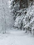 Bana till och med vinterskogen med spår i snön Arkivfoto