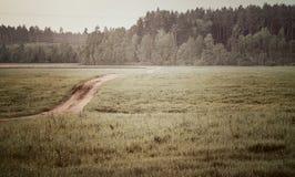 Bana till skogen Arkivbilder
