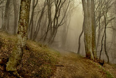 Skog med dimma Arkivbilder