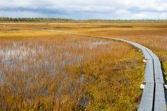 bana till våtmark Fotografering för Bildbyråer