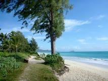 Bana, träd och bänk längs den Waimanalo stranden Arkivfoton