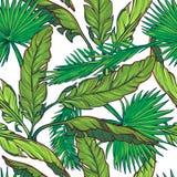 Banaan en palmbladeren op witte achtergrond Royalty-vrije Stock Foto's