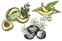 Banaan, Meloen en Kokosnotenschetsillustraties Grafische Hand getrokken die illustraties op witte achtergrond worden geïsoleerd stock afbeelding