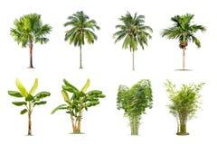 Banaan, palm, bamboe op geïsoleerde achtergrond stock fotografie