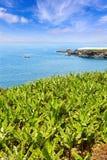 Banaanaanplanting dichtbij de oceaan in La Palma Stock Foto's