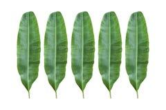 banaanblad stock foto's