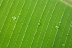 Banaanbladeren Royalty-vrije Stock Afbeelding