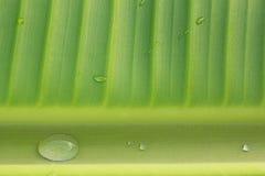 Banaanbladeren Stock Foto's