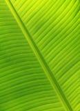 Banaanbladeren royalty-vrije stock fotografie
