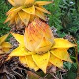 Banaanbloemen stock fotografie