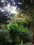 Banaanbomen in een weelderig tropisch bos vele verschillende bomen in het landschap royalty-vrije stock afbeeldingen