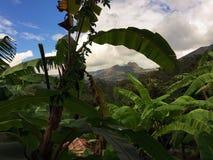 BANAANbomen MET MOUNTAIN VIEW IN YUNGUILLA-VALLEI ECUADOR Stock Afbeeldingen