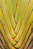 Banaanboom Stock Fotografie