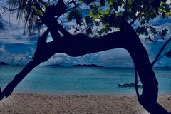 Banaaneiland Coron Stock Foto