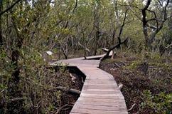 Banagångbana som göras av trä längs den leriga banken av floden Arkivbild