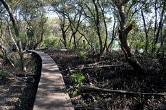 Banagångbana som göras av trä längs den leriga banken av floden Royaltyfria Bilder