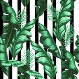 Bananów liści wzór tropikalny tło wektor Obraz Stock