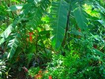 bananów liście w południowej porcelanie obrazy stock