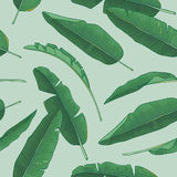 Bananów liści wzór zdjęcia royalty free
