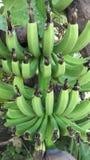 banan obrazy royalty free