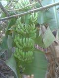 banan royaltyfri bild