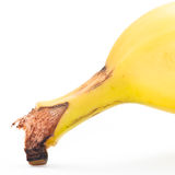 Banan Arkivbild