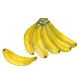 banan banana dojrzały odosobniony Fotografia Stock