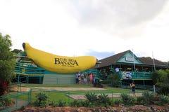 banan duży Fotografia Royalty Free