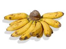 Banan Fuit Arkivfoto