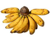 Banan Fuit Royaltyfri Foto
