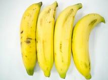 banan grupa Obraz Royalty Free