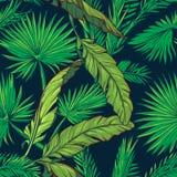 Banan i drzewko palmowe opuszczamy na zmroku - błękitny tło Obraz Stock